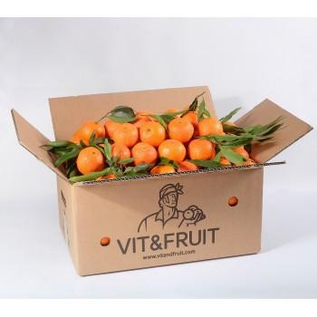 Clementina Orri Vit&Fruit - Caja 6 Kgs. Mandarinas Vit&Fruit