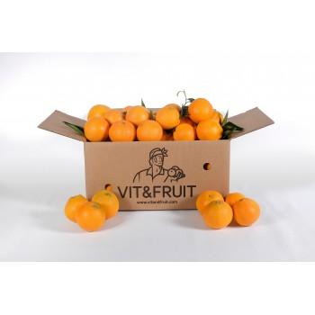 Naranjas Vit&Fruit - Caja 6 Kgs. Zumo Naranjas Vit&Fruit