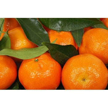 Clementina Orri Vit&Fruit - Caja 10 Kgs. Mandarinas Vit&Fruit